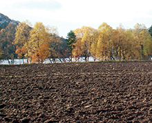 Why is 2015 the International Year of Soils?